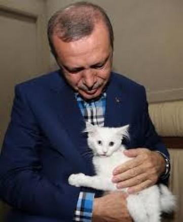 AKP Kedi Gibi Bir Muhalefet İstiyor