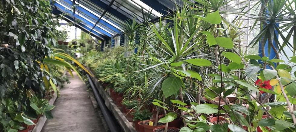 Botanik Bahçesine Dokunmayın
