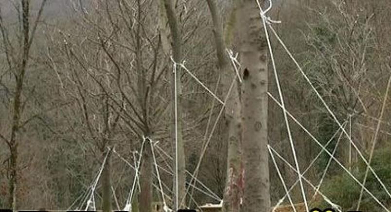 Maçka Parkından Sökülen Ağaçlar Kurudu