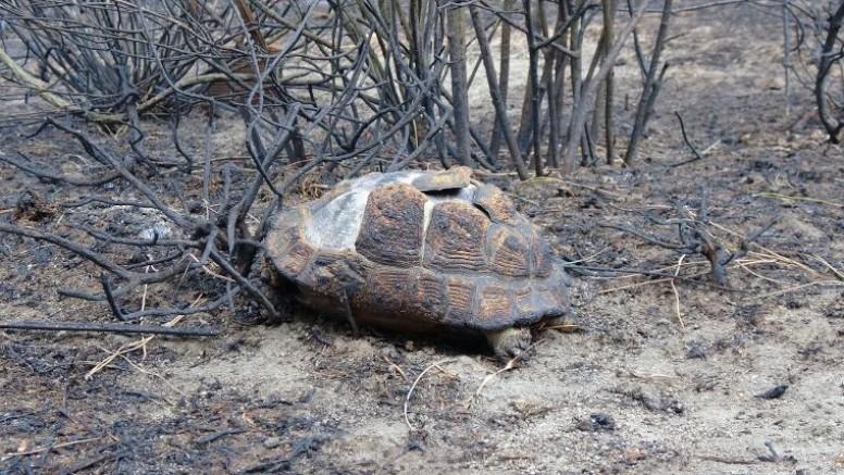 Marmara Adası'nda 80 hektar orman yandı